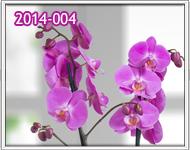 orquideas a domicilio