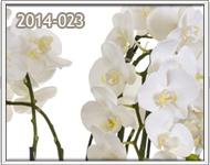 orquideas a zona 10