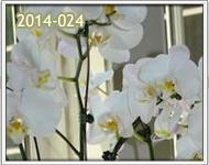 orquideas a zona 15