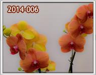 envio de orquideas a guatemala