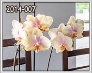 envio seguro de orquideas en guatemala