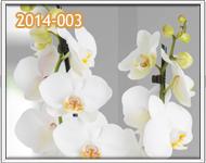 orquideas antigua guatemala