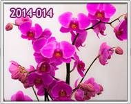 envio de orquideas para cumpleaños