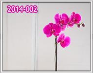 orquideas guatemala