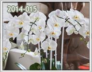 orquideas para cumple