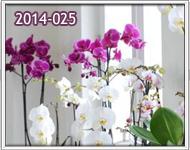 orquideas a zona 16