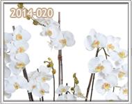 orquideas en guatemala para el 14 de febrero