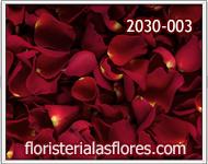 petalos de rosas rojas