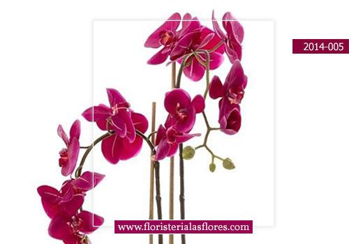venta de orquideas en guatemala