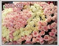 arreglos con 1000 rosas en guatemala