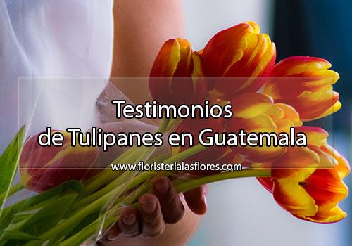 Tulipanes bellos a domicilio en la ciudad de Guatemala
