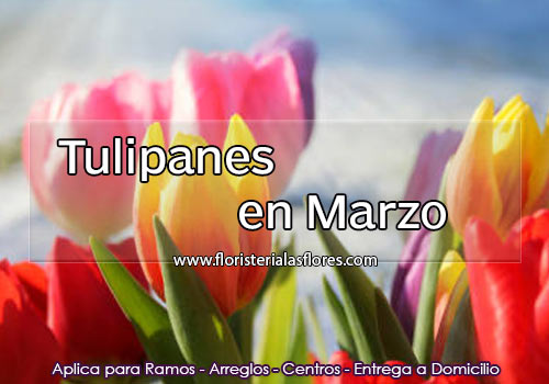 regalar tulipanes en guatemala