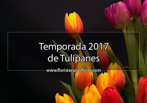 Tulipanes en Guatemala a domicilio