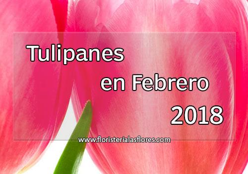 tulipanes 2018 en guatemala