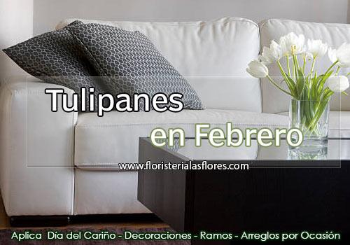 tulipanes en guatemala en el mes de febrero