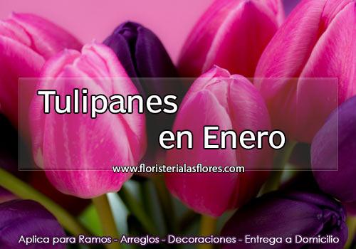 Tulipanes en Enero en Guatemala