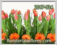 Jardinera de Tulipanes con Gerberas
