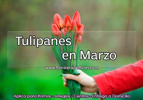 tulipanes en marzo