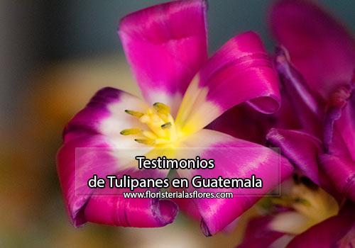 Tulipanes frescos y naturales en Guatemala